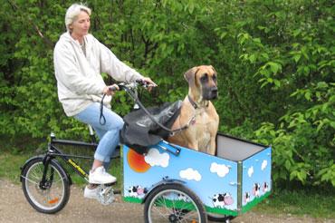 Hej Erik Som aftalt lidt billeder af vores oplevelser med Bellabiken Vedlægger også billeder med Freya, hunden som cyklen jo er bestilt til. Hun er blevet rigtig glad for cyklen og det har faktisk ikke været noget problem, at lære hende at cykle, hun springer forventningsfuld op selv. Vi har været på nogle skønne ture, hvor vi med cyklen har tid og mulighed for både at nyde naturen og hinandens selskab. Cyklen kører perfekt, er ikke spor tung, trods den lidt store last, og der er faktisk plads, så hun kan ligge ned -mange tak Mange tilfredse hilsner fra Freya, Pia og Kent